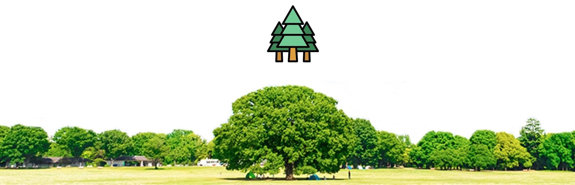 「80億マグロの樹」植林プロジェクト